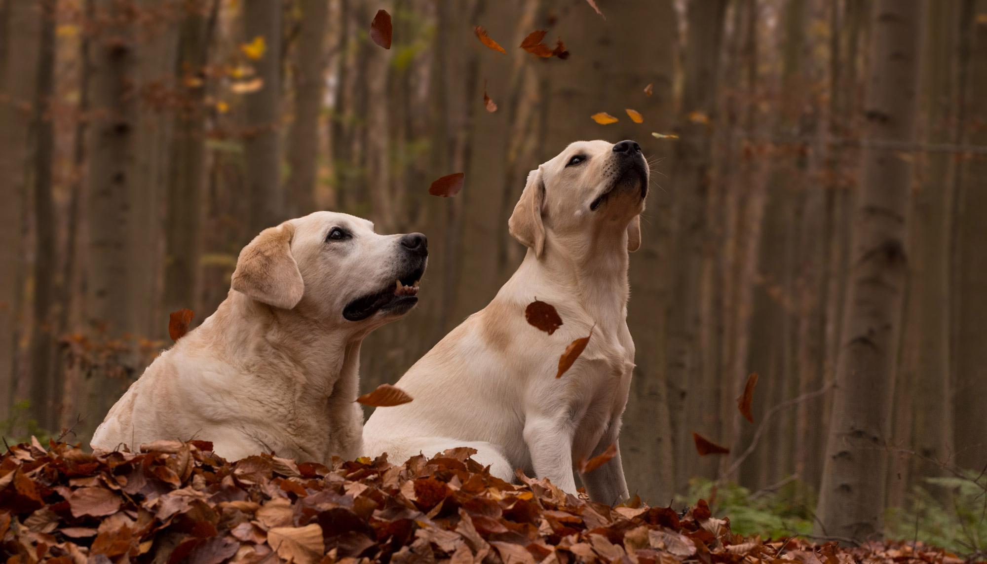 Welkom bij Zennehond hondencoaching