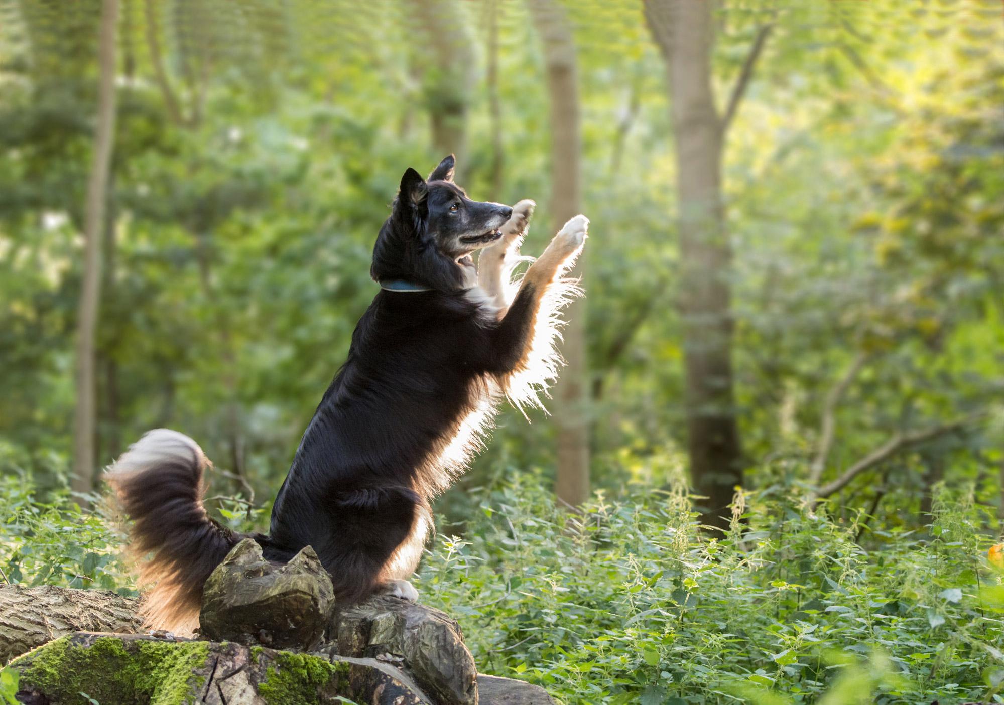 Individuele puppy- en hondenbegeleiding bij Zennehond