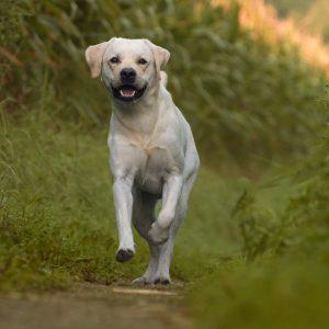 Kom samen met je hond levensvaardigheden opdoen en sta samen op een ontspannen manier en vol vertrouwen in het dagelijks leven.
