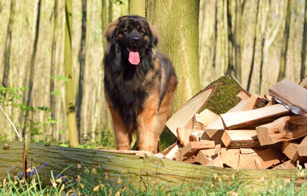 Individuele puppy- en hondenbegeleiding Zennehond