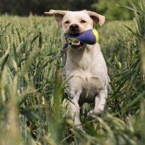 Hebt u een (jong)volwassen hond en ondervindt u kleine moeilijkheden in het dagelijkse leven met uw hond? Zennehond begeleidt je hier graag in via de individuele basistraining voor volwassen honden. Samen gaan we kijken naar de leefwereld van je hond, waarom hij bepaald gedrag vertoont en hoe we hem daarin kunnen begeleiden. We streven ernaar de connectie tussen u en uw hond te optimaliseren.