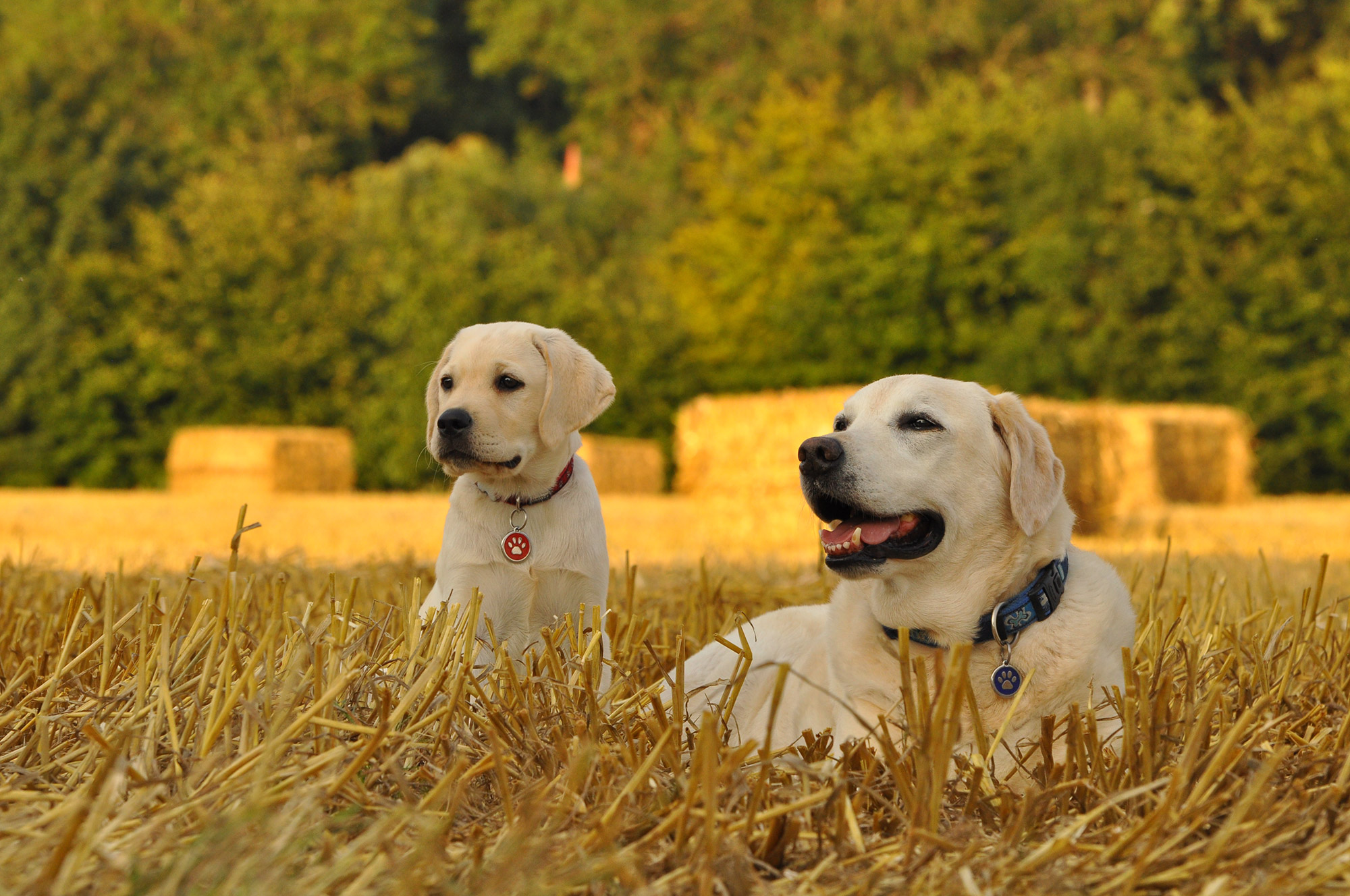 ZenneHond: hondencoaching en hondenfotografie
